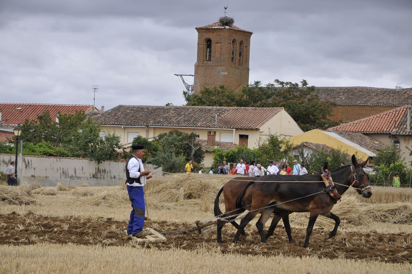 Imagen de Castrillo de Villavega